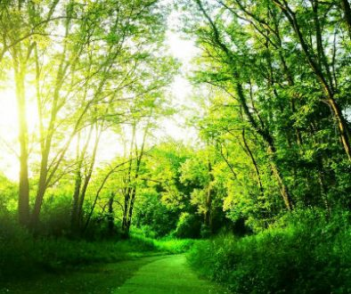 forest-path-clarity-coaching-sessions-600x337