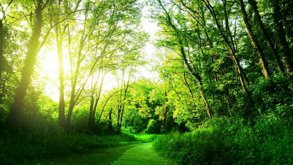 forest-path-clarity-coaching-sessions-600×337