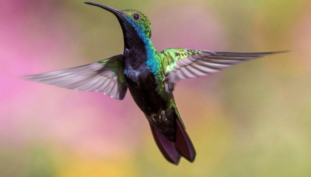 hummingbird_1280x853