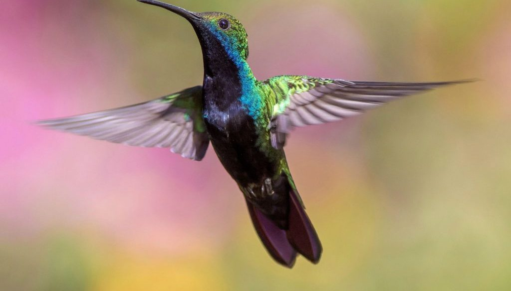 hummingbird_1800x1123
