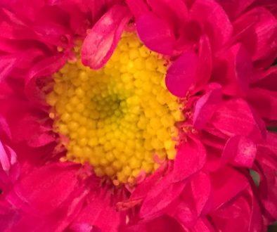 trader joe's pink flower