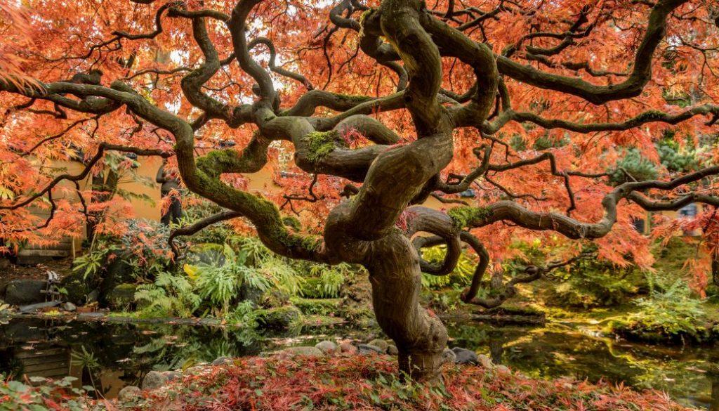 unsplash tree