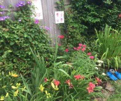garden flowers:site