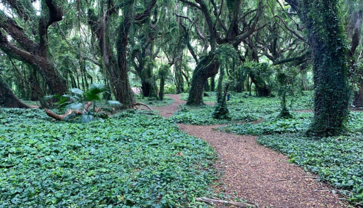 Hawaii path