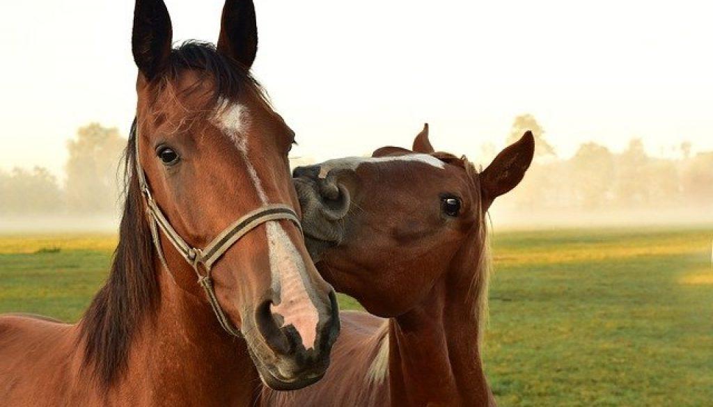 horses-3747374_640