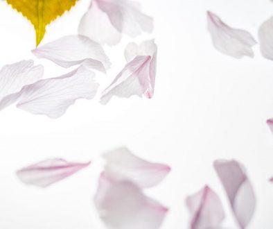 petals falling